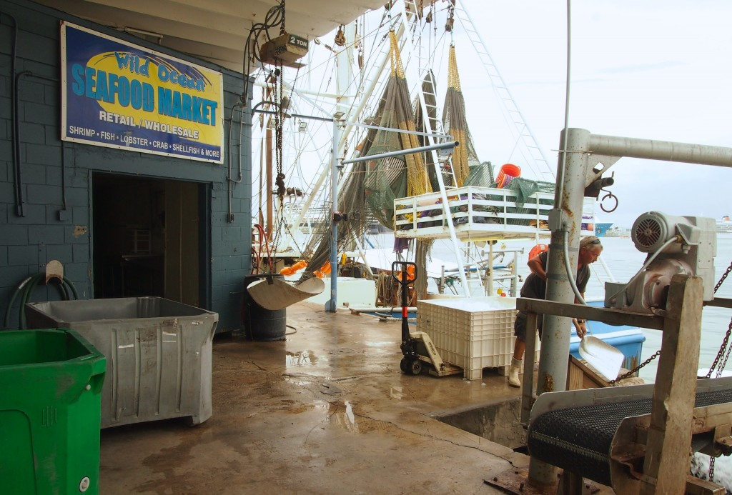 Wild ocean seafood market visit the cove port canaveral for Affordable pools pearl river la