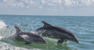 Dolphins in Port Canaveral