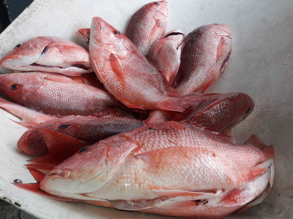 Red_Snapper_Season_Florida_Wild_Ocean_Seafood